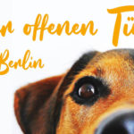 TierheimBerlin_TdoT2019_klein