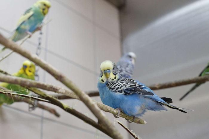 Tiergerechte Wohnungshaltung von Kleinsittichen
